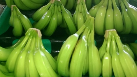 Organic, Fairtrade bananas from Oikocredit partner APPBOSA